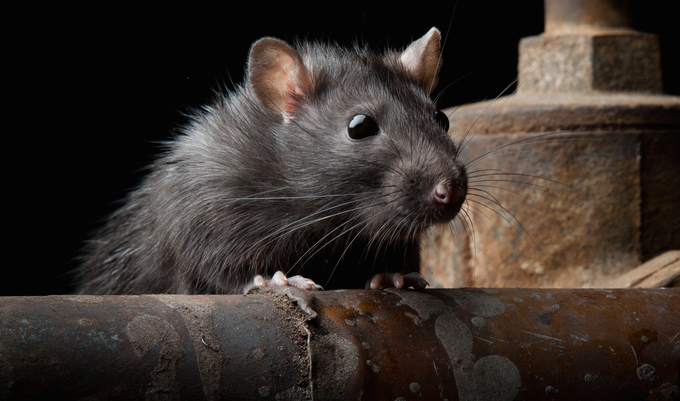 New RAT Targets Koreans And Is Skilled At Evading Detection
