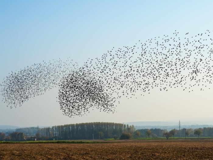 Newsmaker Interview: Derek Manky on 'Self-Organizing Botnet Swarms'