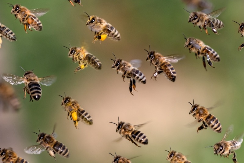 Prepare to Defend Your Network Against Swarm-as-a-Service